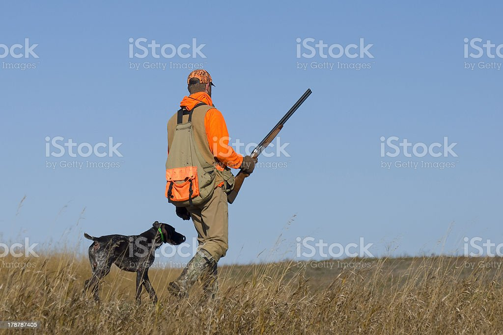 Out Pheasant Hunting royalty-free stock photo