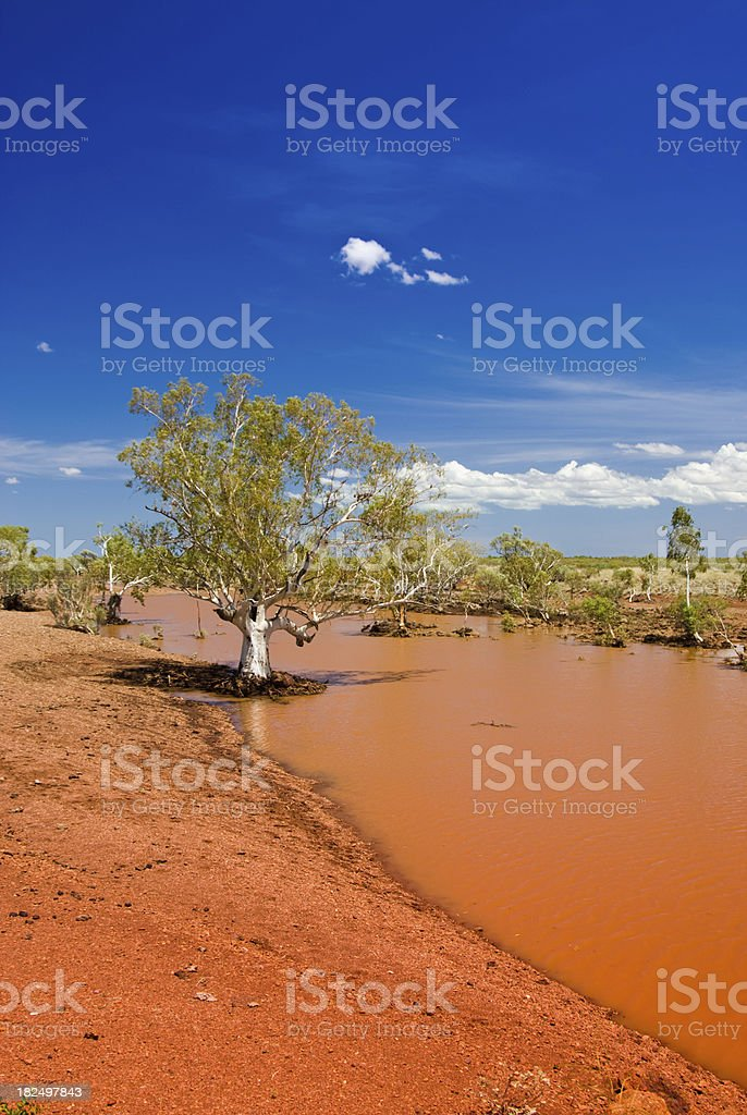 Outback Billabong with tree and blue sky stock photo