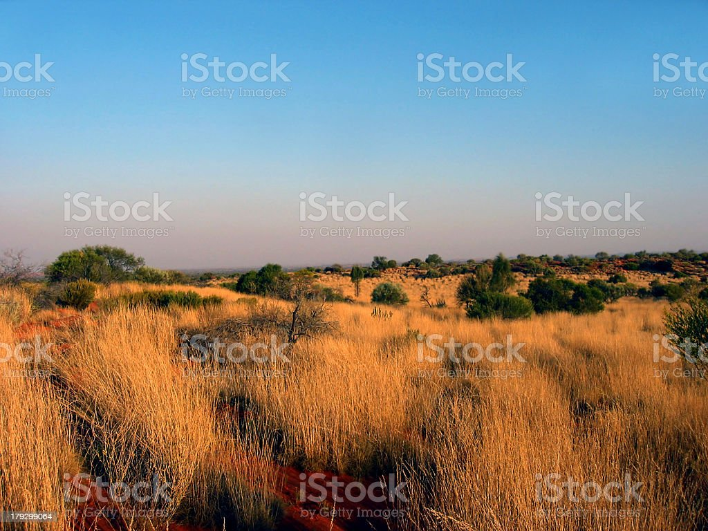 Outback Grass Plain royalty-free stock photo