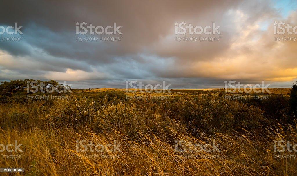 Outback Western  Australia , sunset scene . stock photo
