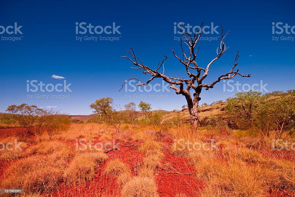 Outback Western Australia - Tree in Karijini National Park stock photo