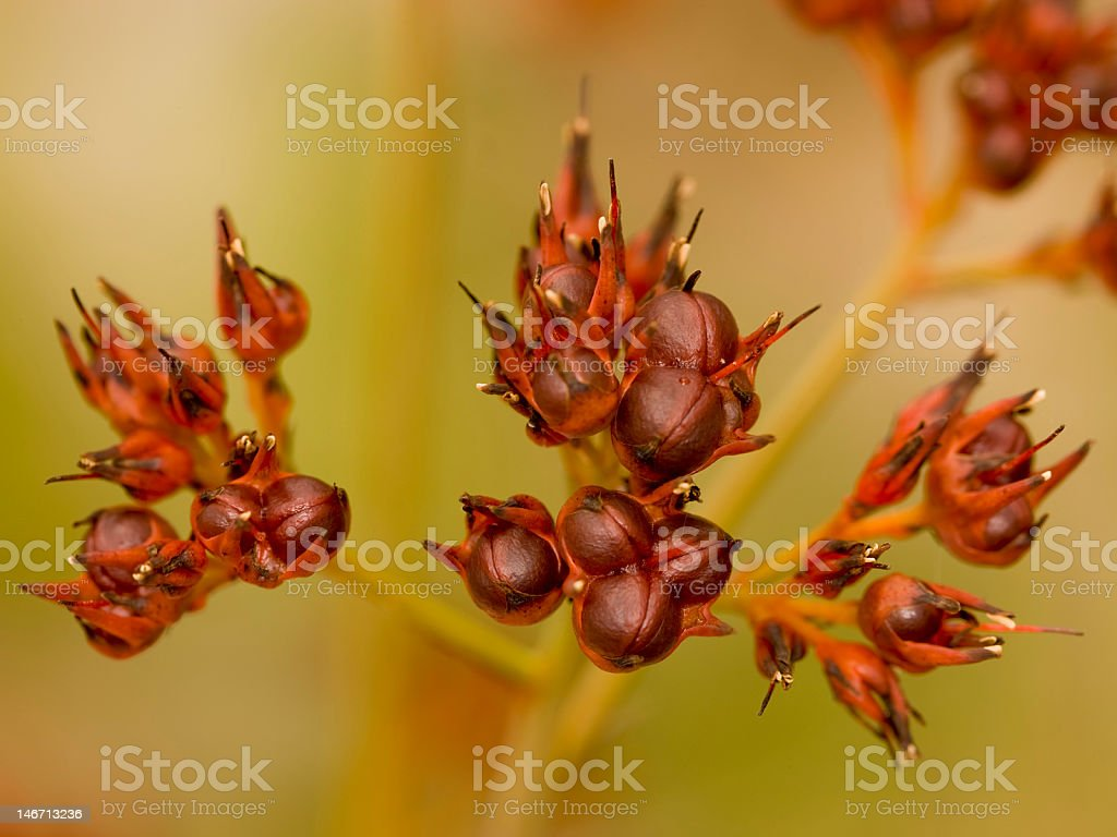 Outback wild flora royalty-free stock photo