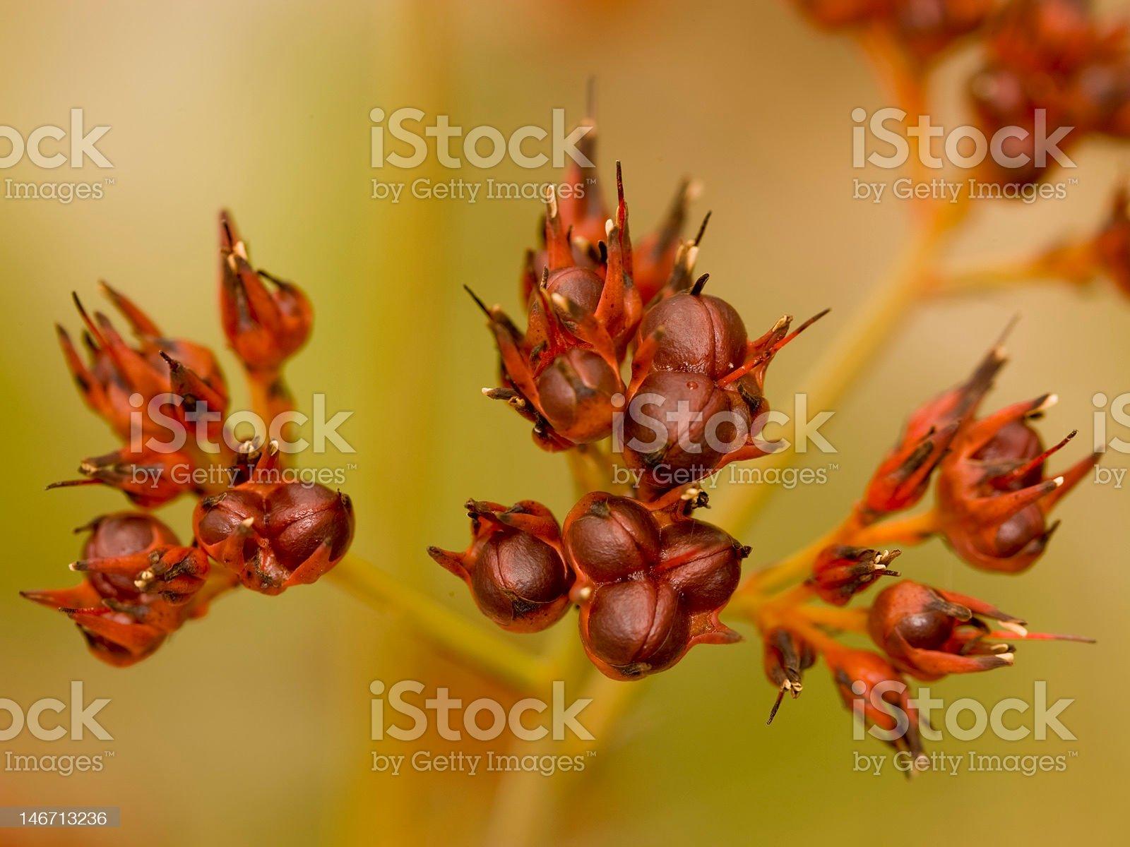 Outback wild flora royalty-free stock photo