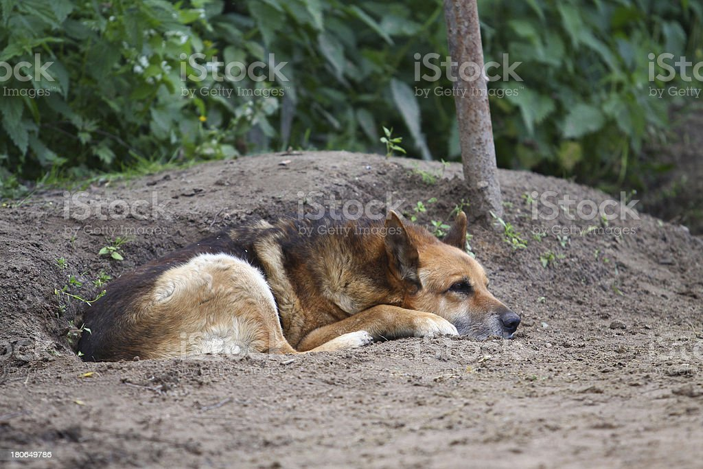 Outbred dog lying on the ground royalty-free stock photo