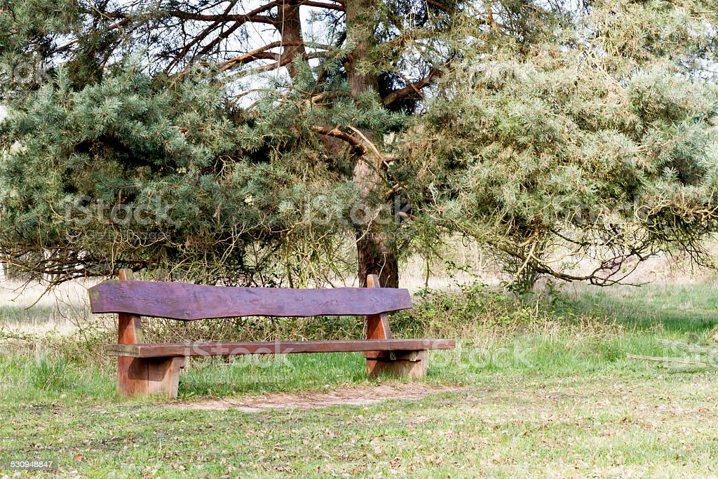 outdoor bench with tree in background stock photo