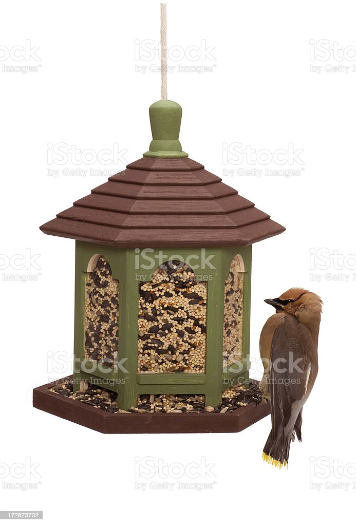 Outdoor bird feeder with cedar waxwing stock photo