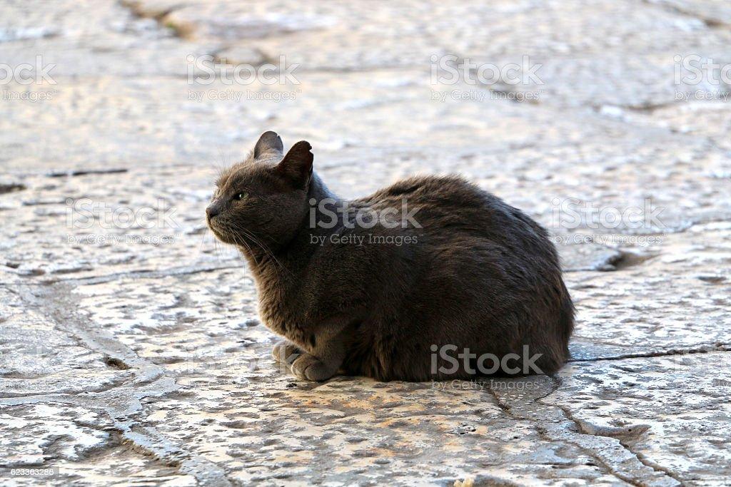 Outdoor Cat stock photo