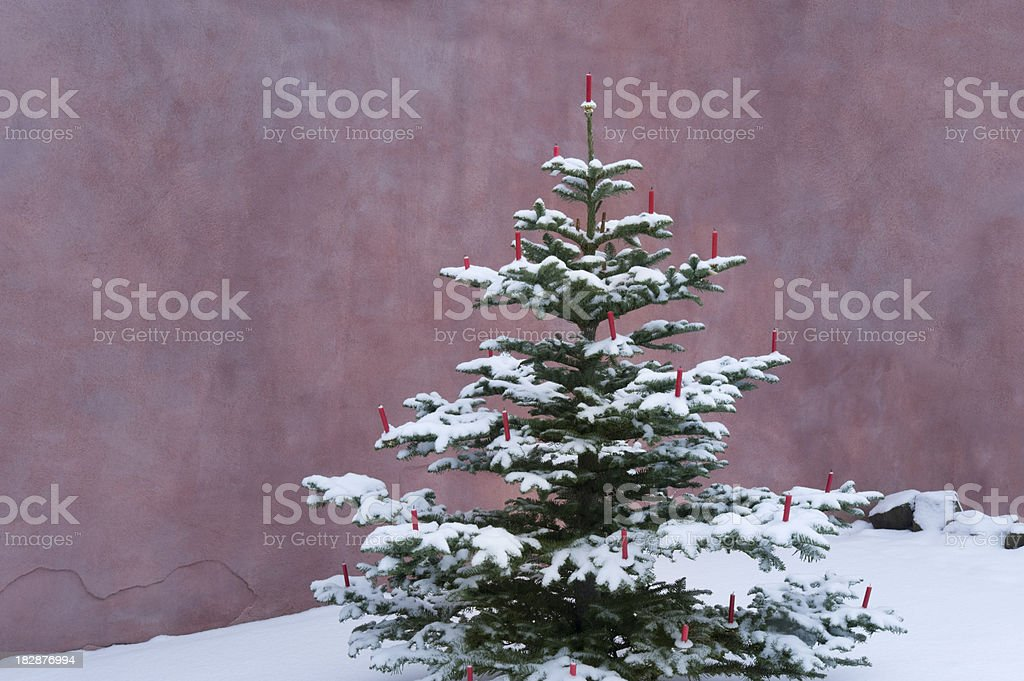Outdoor christmas tree royalty-free stock photo