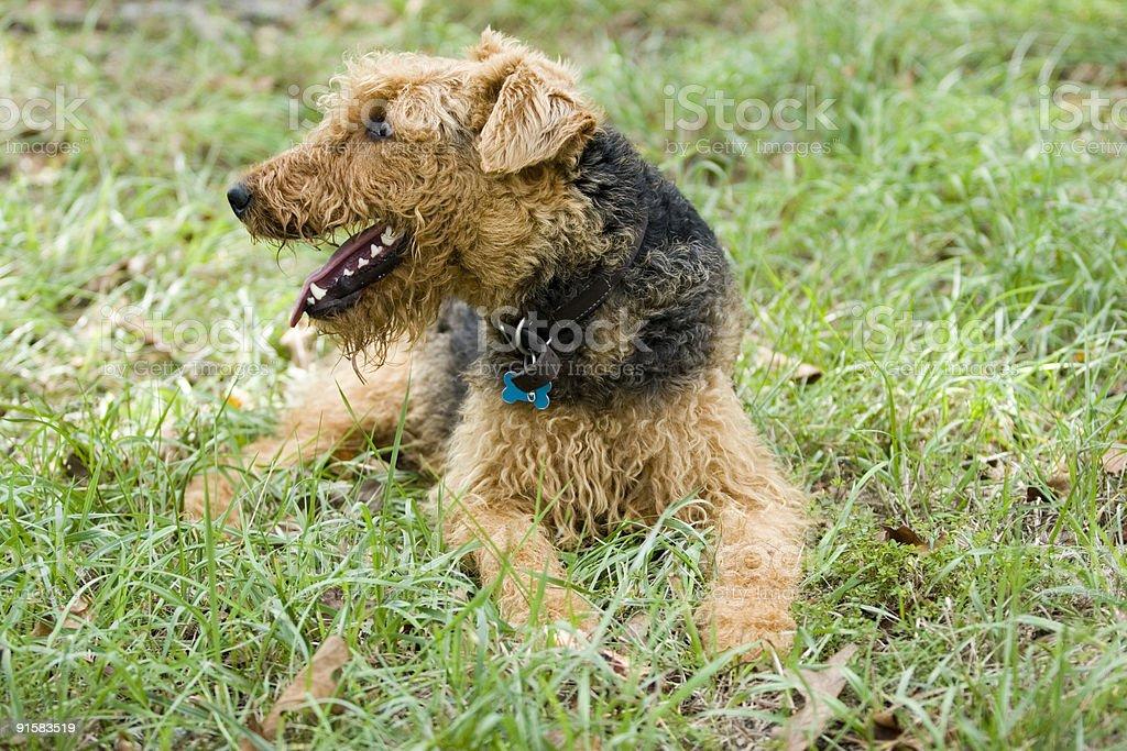 Outdoor Dog Profile stock photo