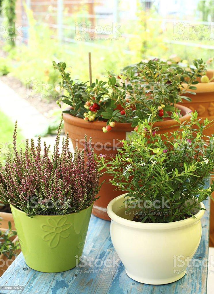 Outdoor flower pots stock photo