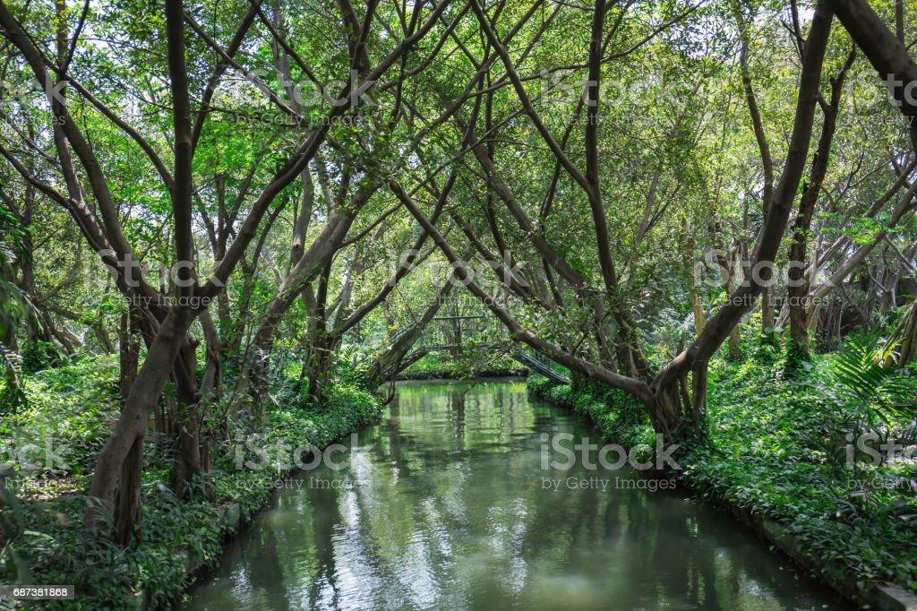 Outdoor garden trees stock photo