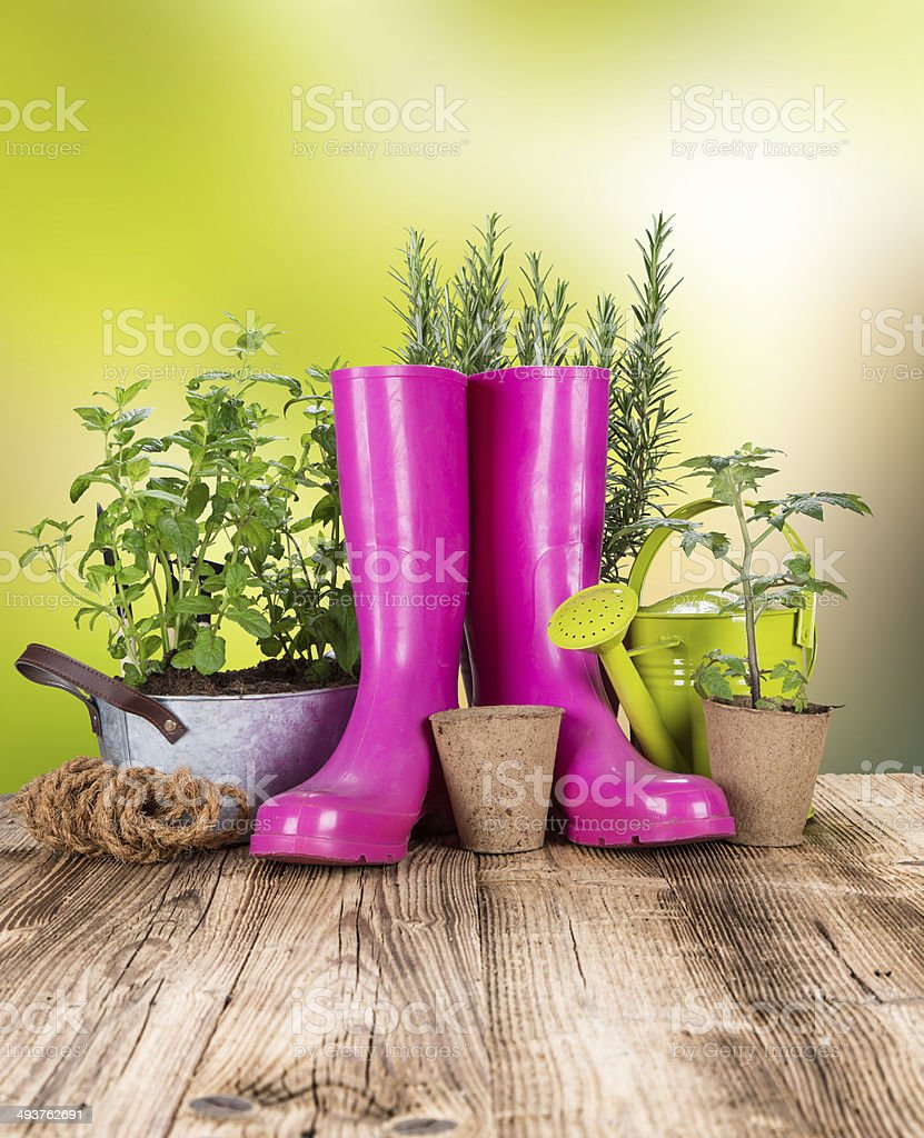 Outdoor gardening tools and herbs stock photo