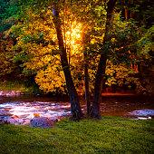 Outdoor lantern illuminating river streams behind the trees at night.