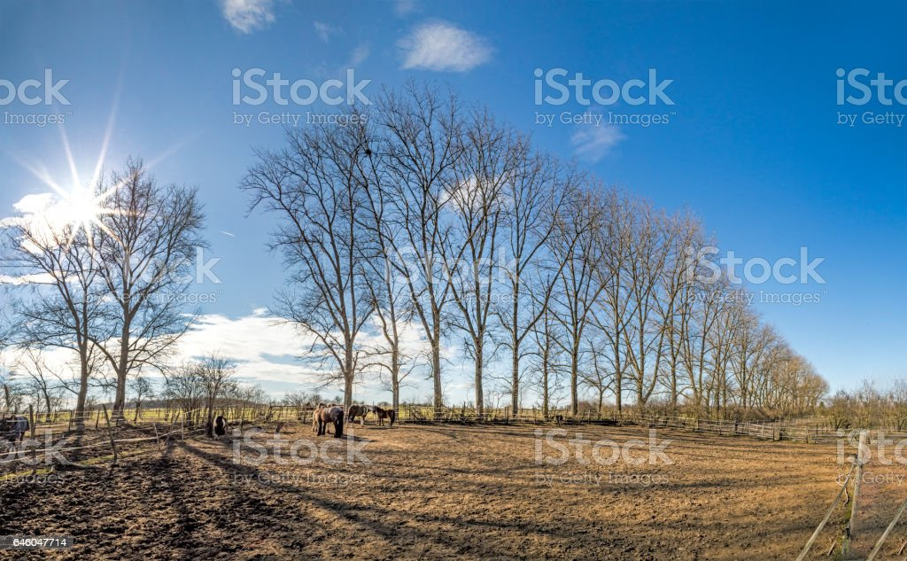 outdoor paddock with horses stock photo