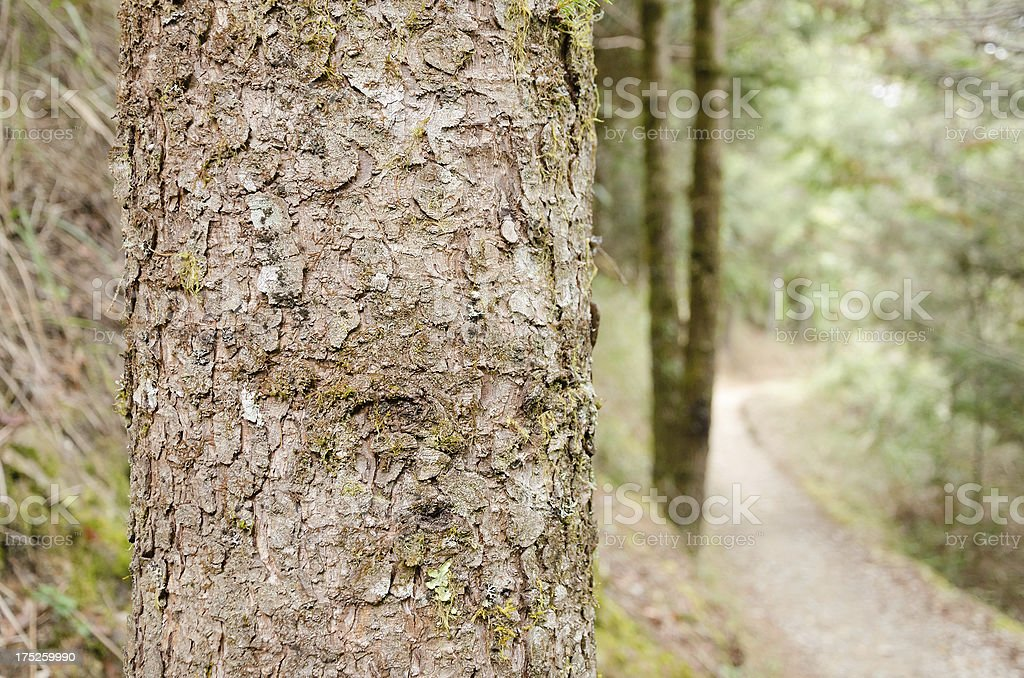 Outdoor path royalty-free stock photo