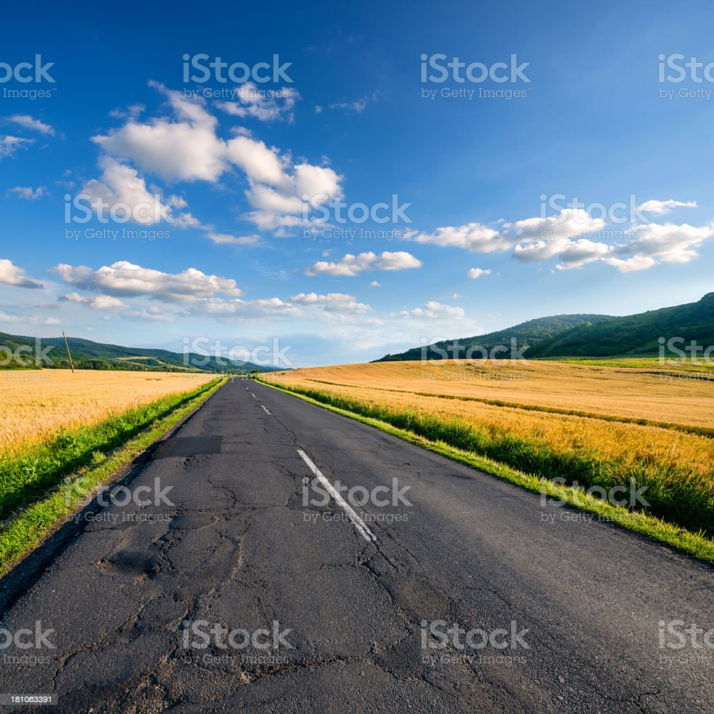 outdoor wheat field royalty-free stock photo