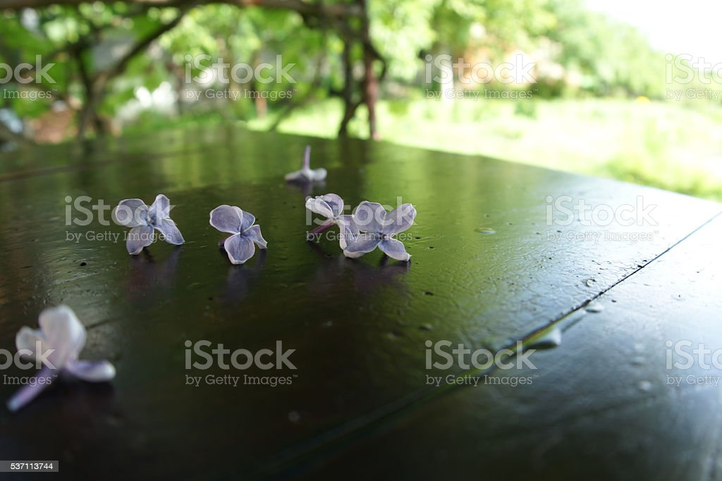 Outdoor wooden table in a garden stock photo
