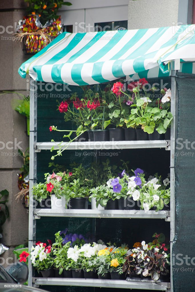 Outdoors retail display of flower pots, flower shop. stock photo