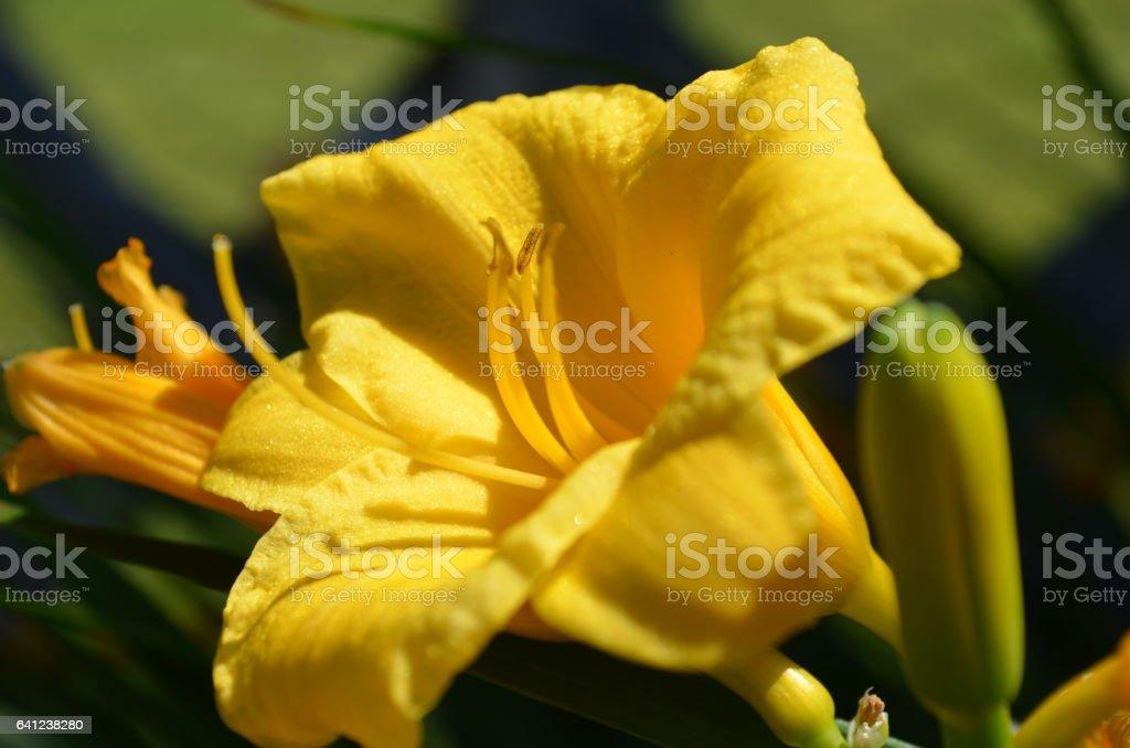 Outstanding Flower stock photo
