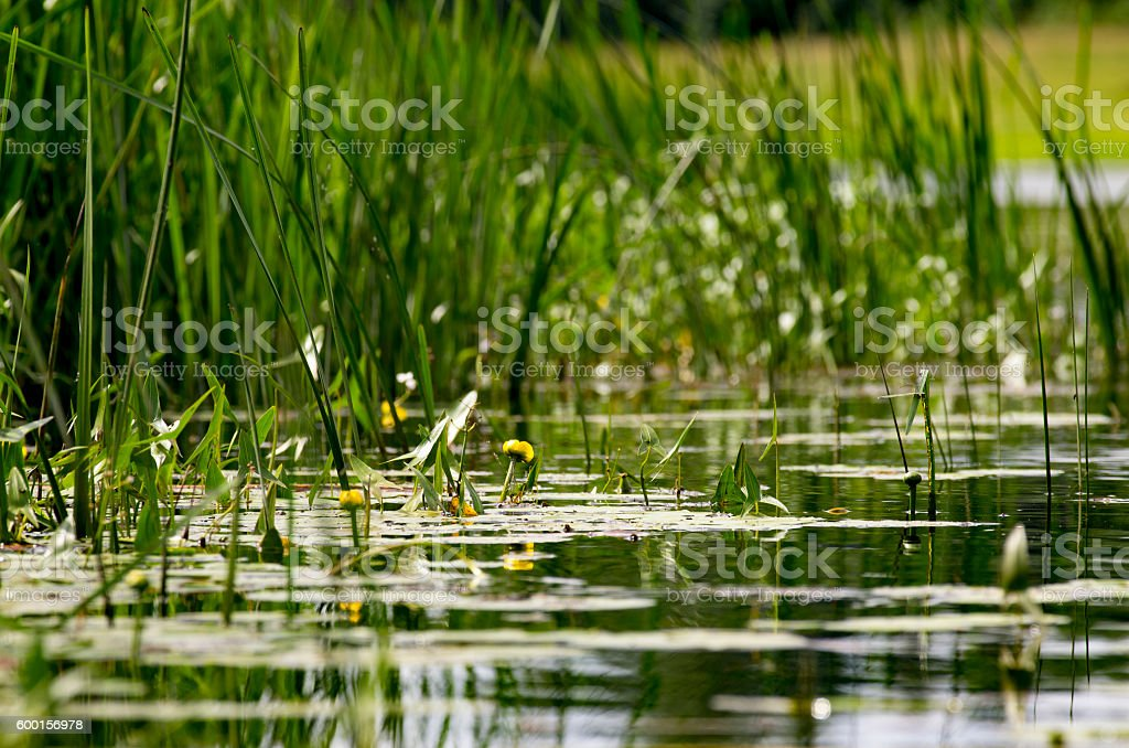 Over a river smooth surface stock photo