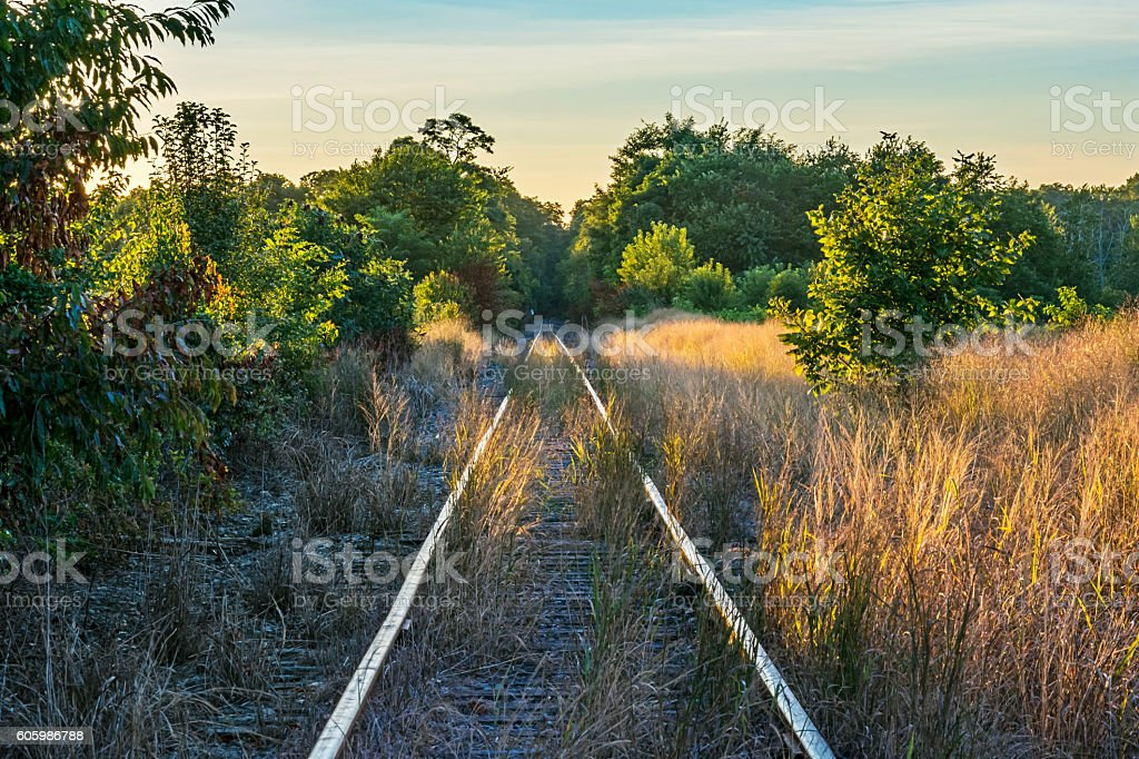 Over Grown Tracks stock photo