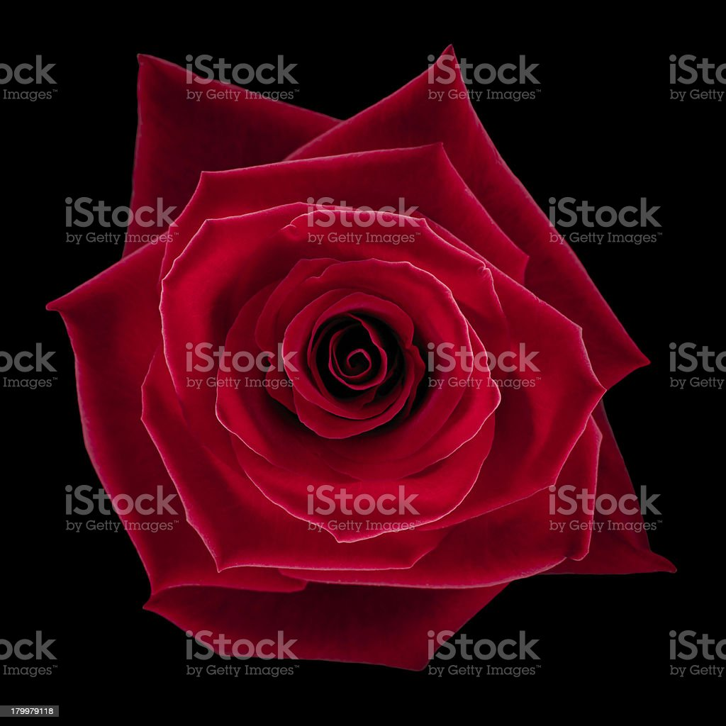 Over head shot of red rose on black background  stock photo