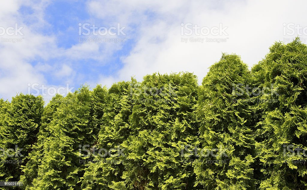 Over the Hedge stock photo