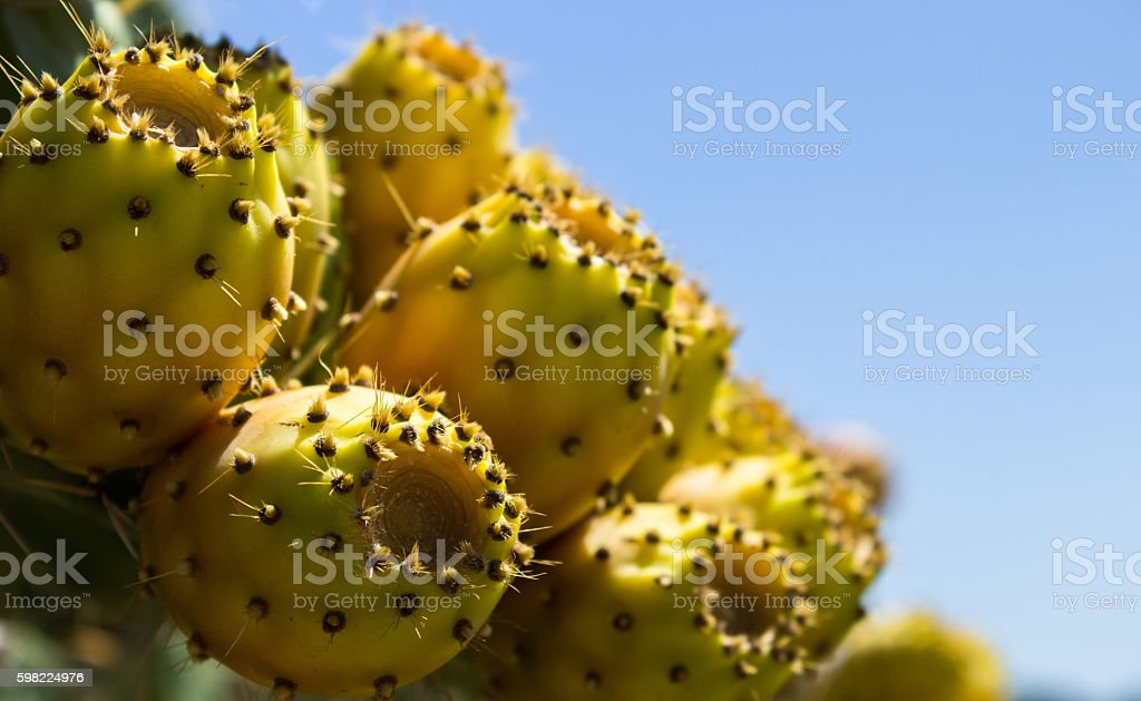 over the spikes under the sweet and succulent fruit stock photo