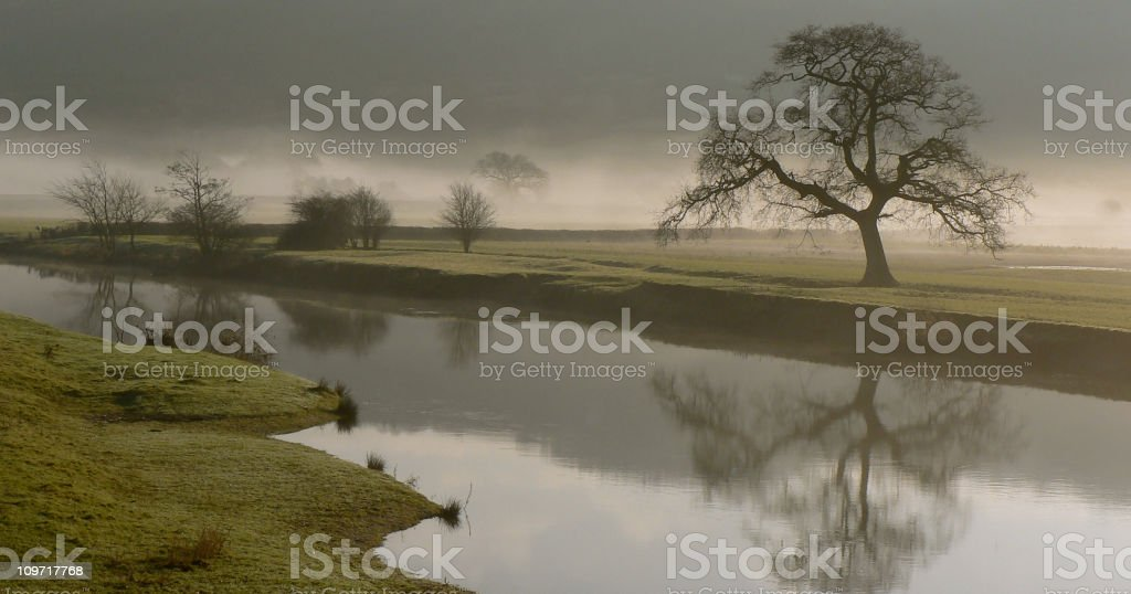 Overcast Day and Dryslwyn Oak on Banks of River Towy royalty-free stock photo