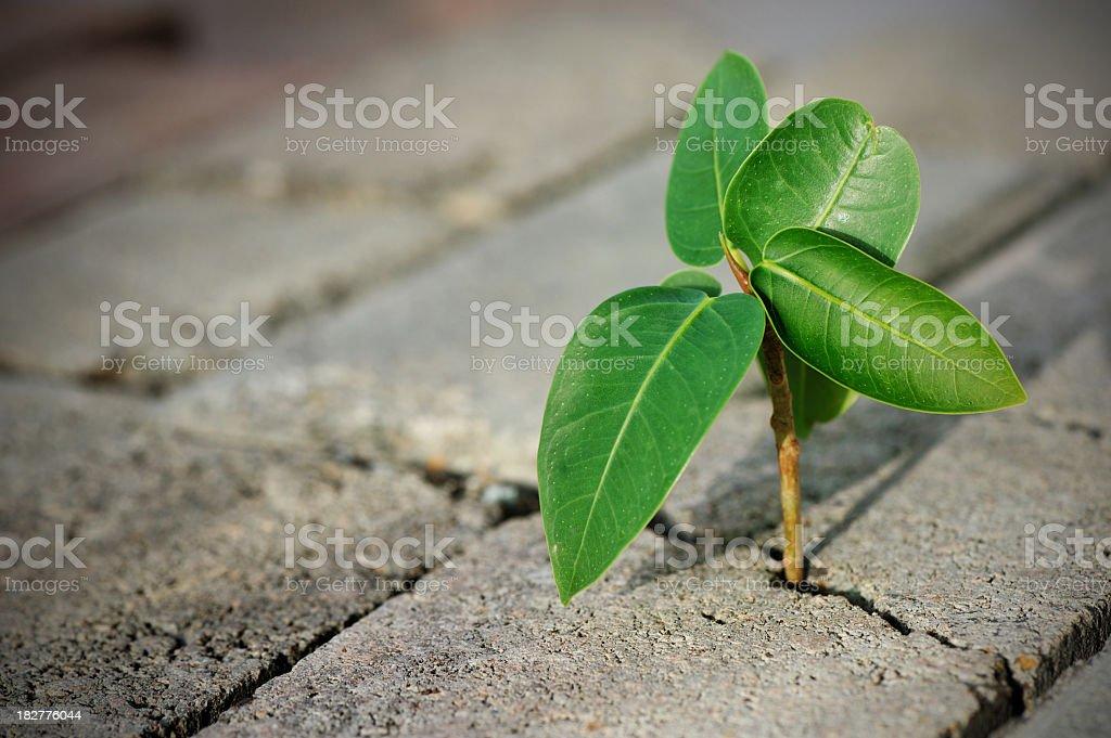 overcometh adversity stock photo