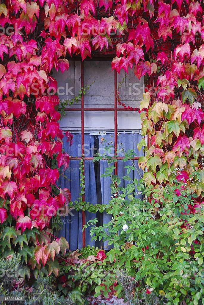 Overgrown Autumn Window royalty-free stock photo