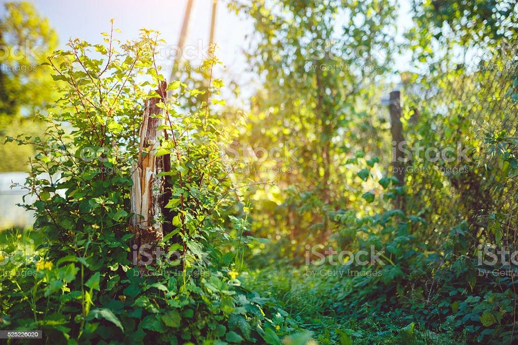 Overgrown backyard stock photo