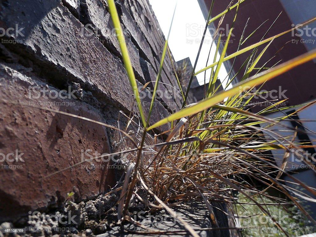 Overgrown Brick Wall stock photo