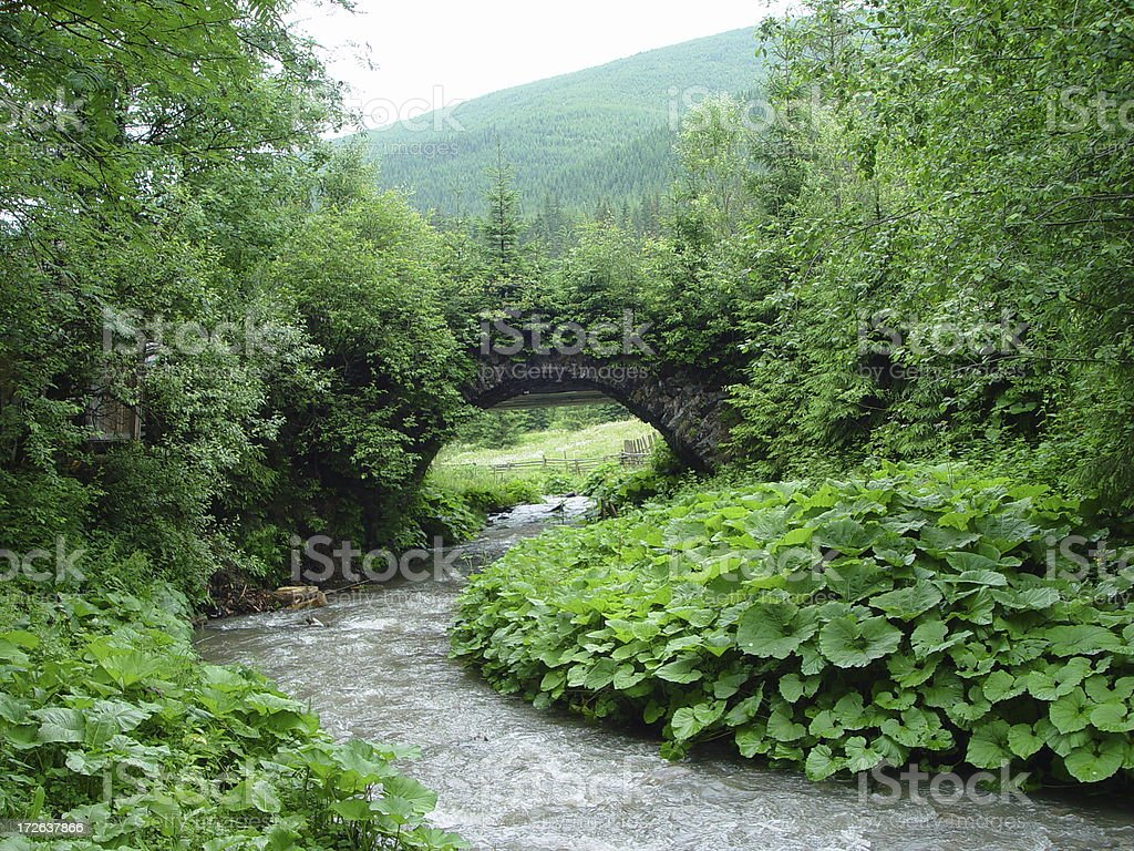 Overgrown Bridge  plants over a small river royalty-free stock photo