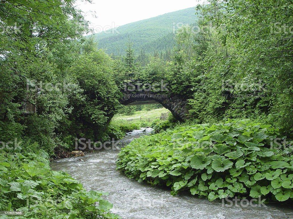 Overgrown Bridge  plants over a small river stock photo
