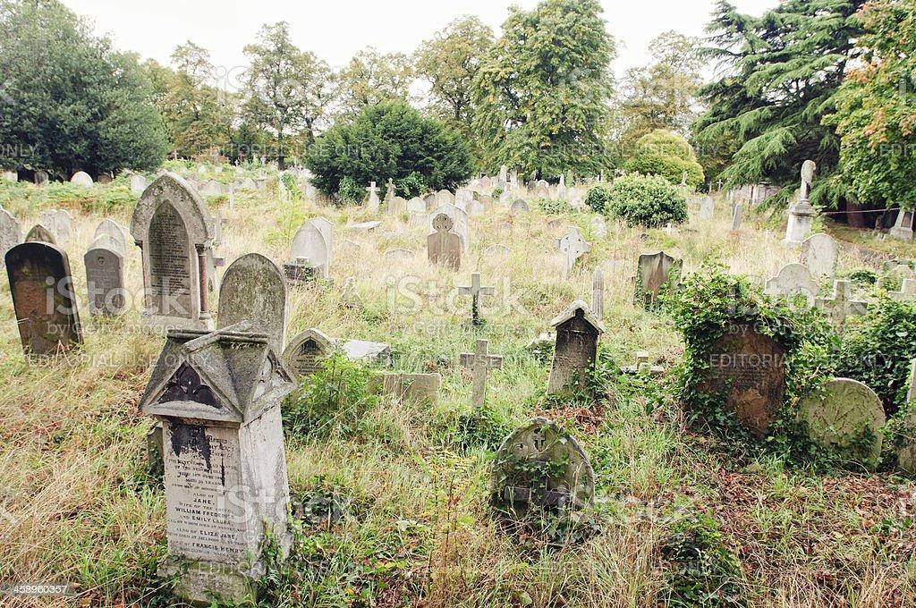 Overgrown cemetery stock photo