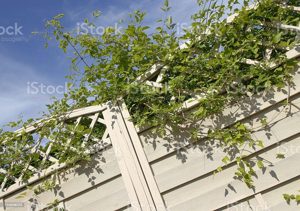 Overgrown Garden Fence royalty-free stock photo