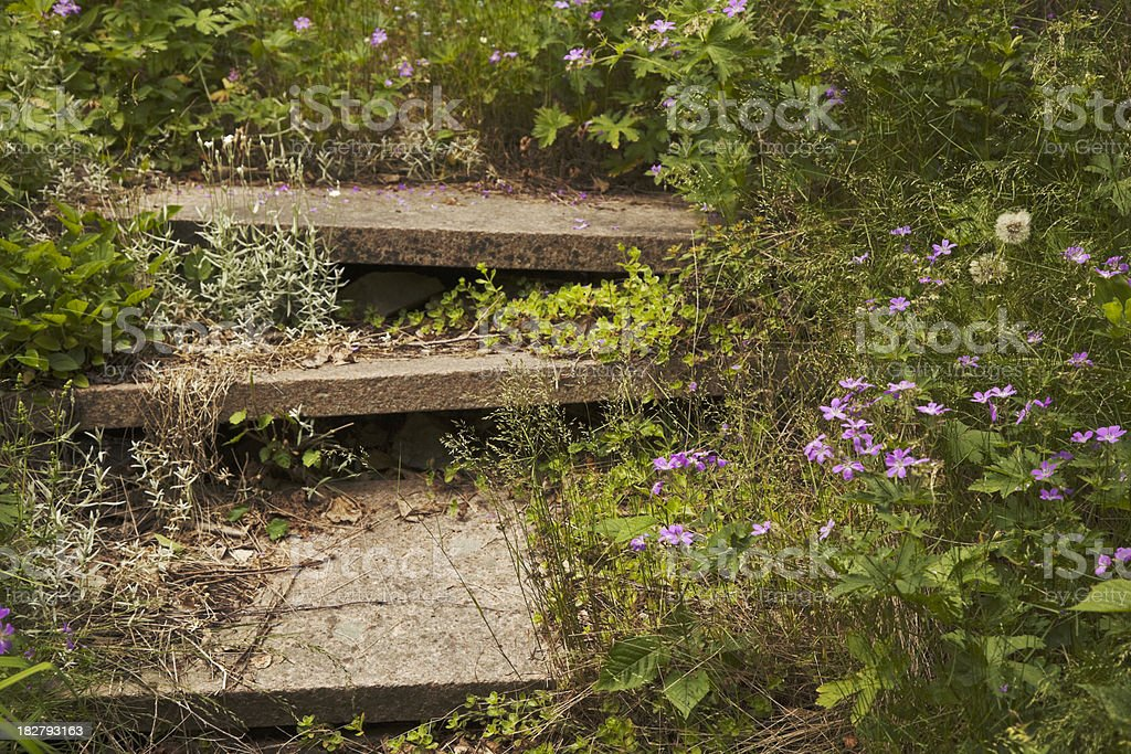 Overgrown garden. stock photo