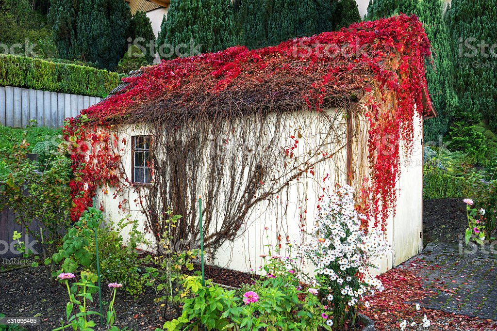 Overgrown garden shed royalty-free stock photo