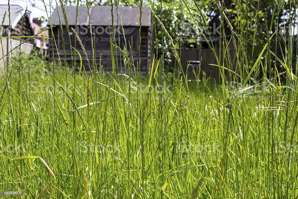 Overgrown grass in a garden stock photo