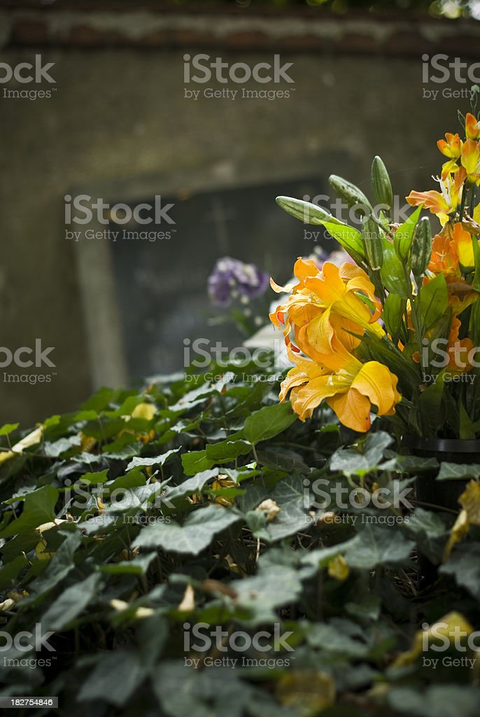 Overgrown grave royalty-free stock photo