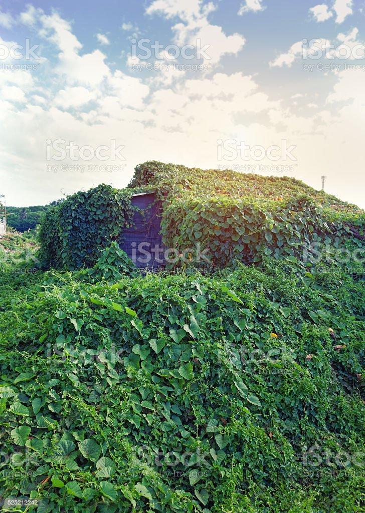 overgrown house stock photo