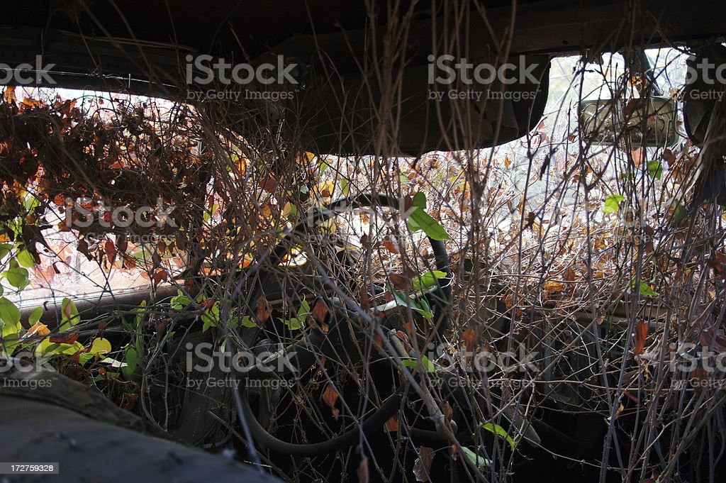 Overgrown interior royalty-free stock photo
