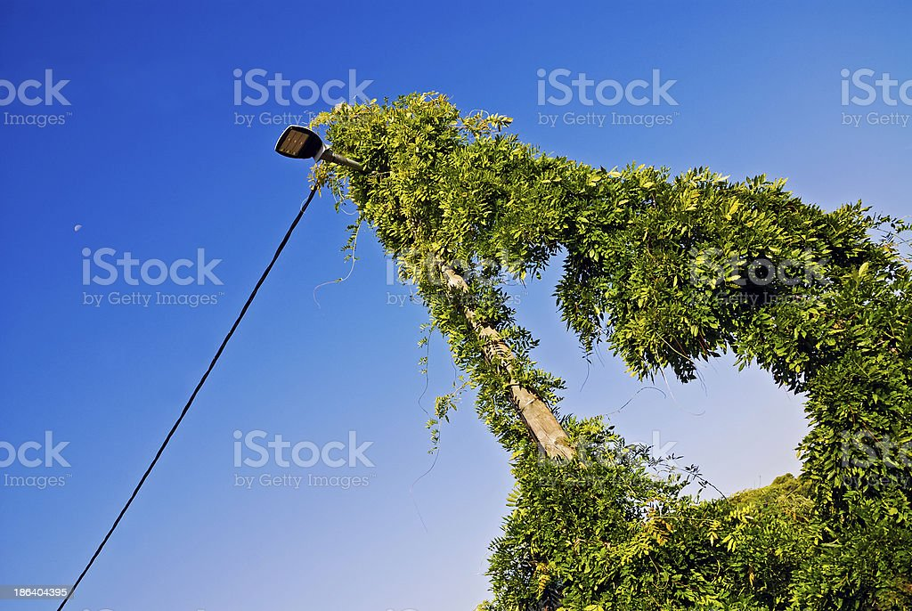 overgrown ivy on a power pole stock photo