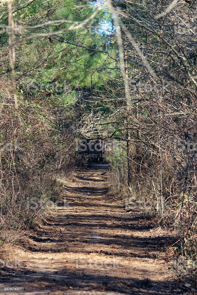 Overgrown Path in the Woods stock photo