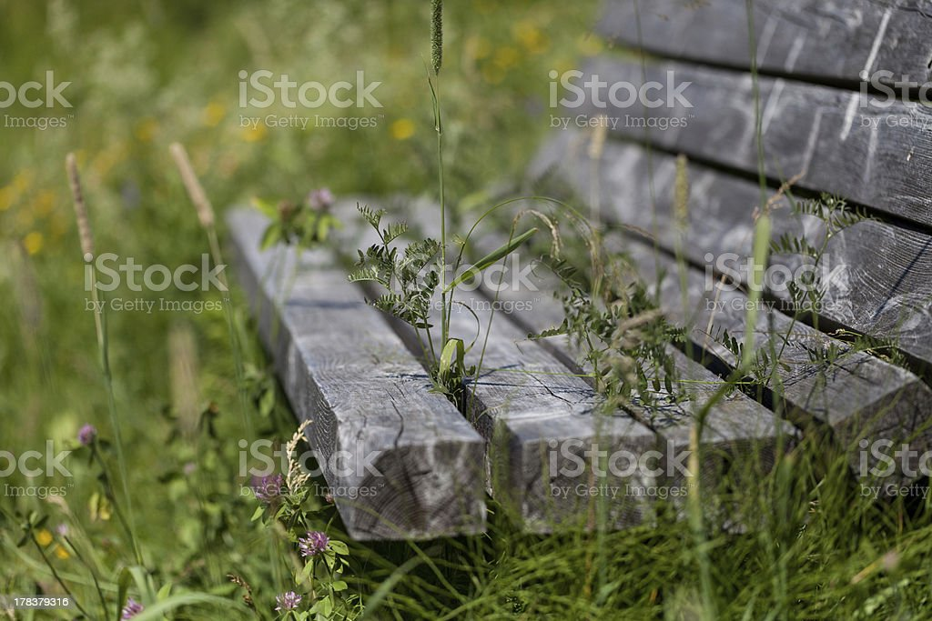 Overgrown royalty-free stock photo