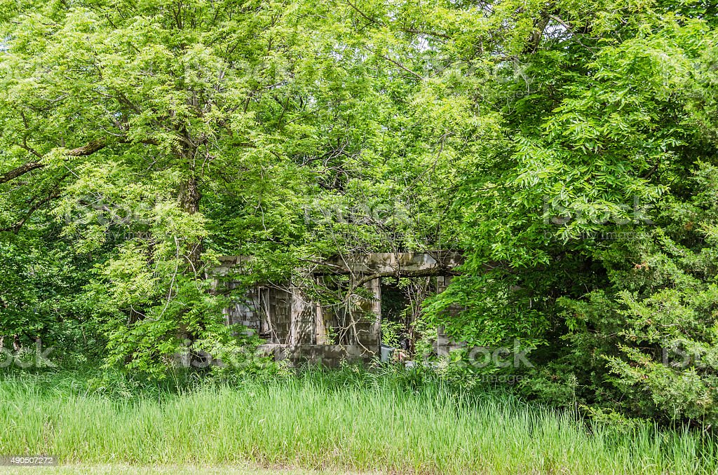 Overgrown stock photo
