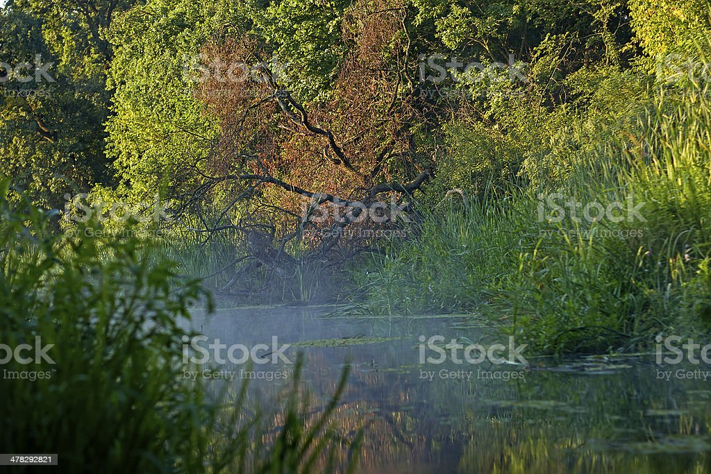 overgrown pond royalty-free stock photo