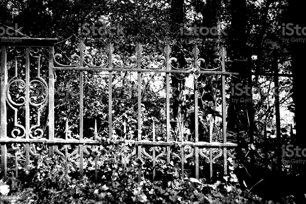 Overgrown railing stock photo