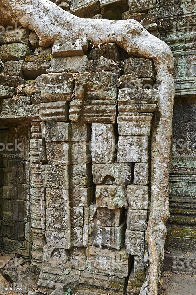 Overgrown Root at Ta Prohm Temple royalty-free stock photo